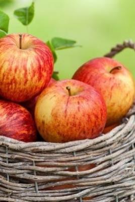 Яблочная ярмарка постер