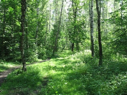 На Химмаше будет создана лесопарковая зона