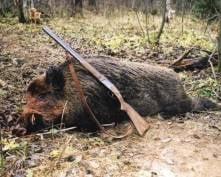 В Мордовии браконьеров наказали за трех убитых кабанов