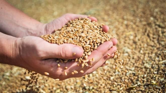 Четыре района Мордовии справились с уборкой зерновых