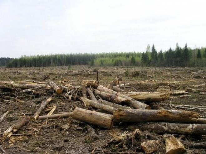 Сохранением лесов Мордовии займется Народный фронт