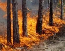 В Мордовии пожар угрожал заповеднику