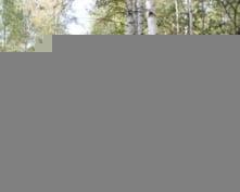 В Мордовии найдена бабушка, ушедшая за грибами шесть дней назад
