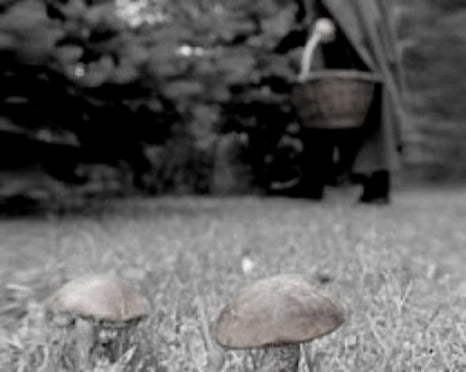 В Мордовии 11 дней не могут найти заблудившегося грибника