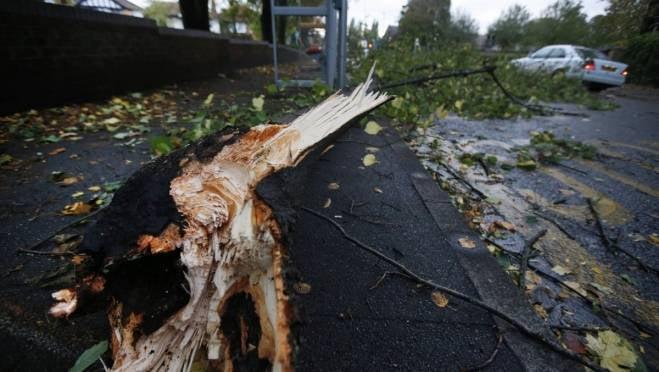 Итоги урагана в Саранске: 340 упавших деревьев и 38 помятых автомобилей
