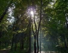 За лесопарковыми зонами Саранска закрепят ответственных лиц