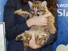 Месси из саранского зоопарка переедет в Пензу