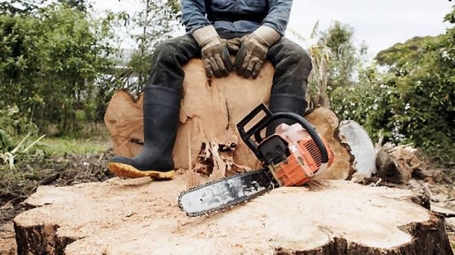 Лесничего в Мордовии осудили за тягу к показателям и пропущенные визиты «черных лесорубов»