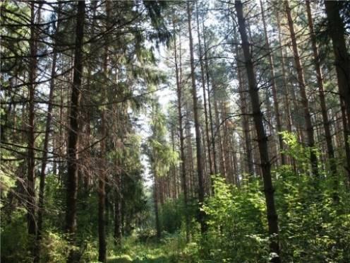 В Мордовии лесной фонд использовали не по назначению