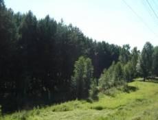 В Мордовии в лесопосадках обнаружен труп молодого мужчины