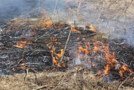 Для спасателей Мордовии выходные выдались жаркими