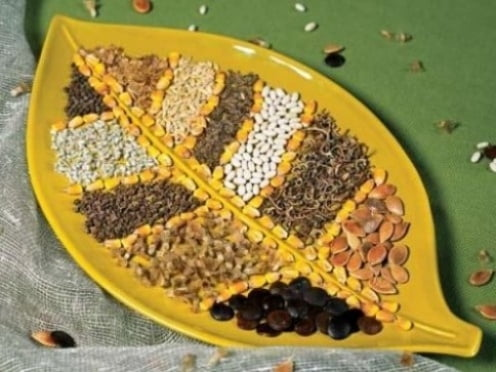 В Мордовии проверили качество семян и саженцев