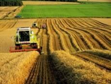 Перед аграриями Мордовии поставили амбициозные задачи