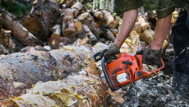 Парочку «черных лесорубов» поймали в лесах Темниковского района