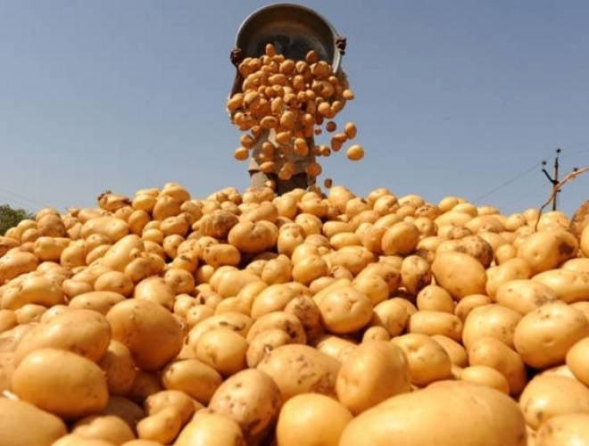 Мордовия сделает ставку на собственный картофель