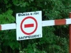 Жителям Мордовии запретили посещать леса