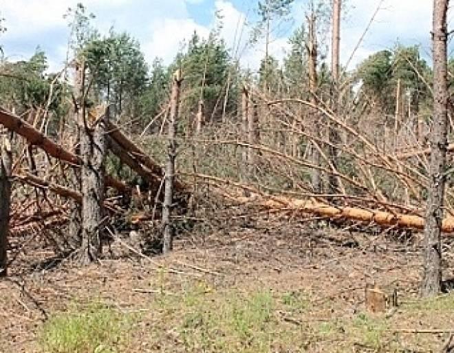 В лесах Мордовии ликвидируют последствия летних ураганов