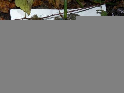 В Саранске наркосбытчика-миллионера приговорили к 6,5 годам строго режима