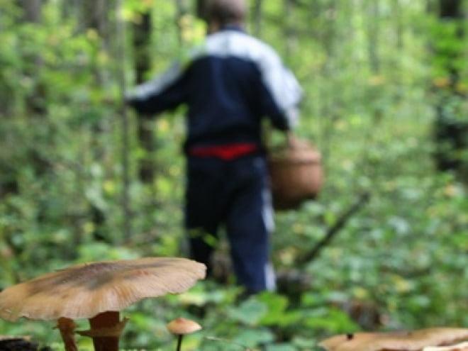 В Мордовии грибники обнаружили в лесу труп