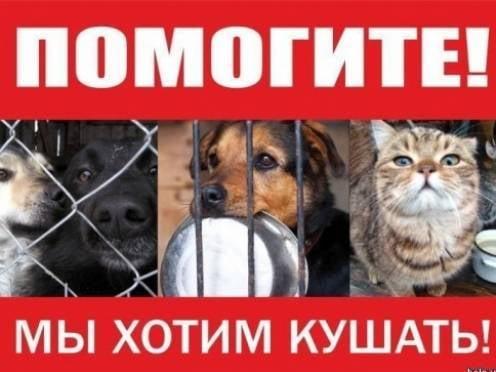 В Саранске проходит ярмарка в помощь бездомным животным