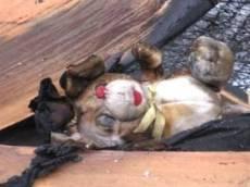 С начала года в Мордовии в огне погибло 4 ребенка
