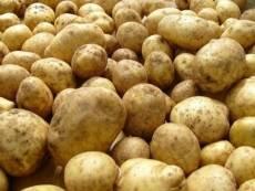 В Мордовии посадят больше овощей и зерновых