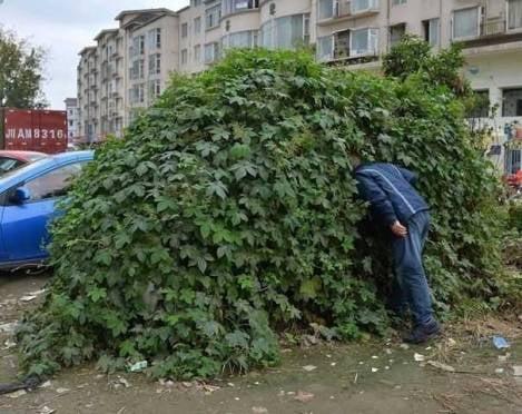 Жителя Саранска нашли в кустах с украденными брюками