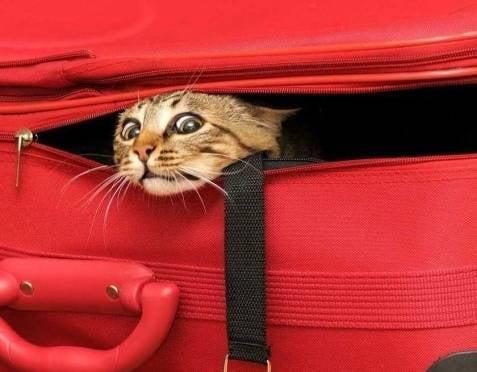 В России животным разрешили «путешествовать» в плацкарте