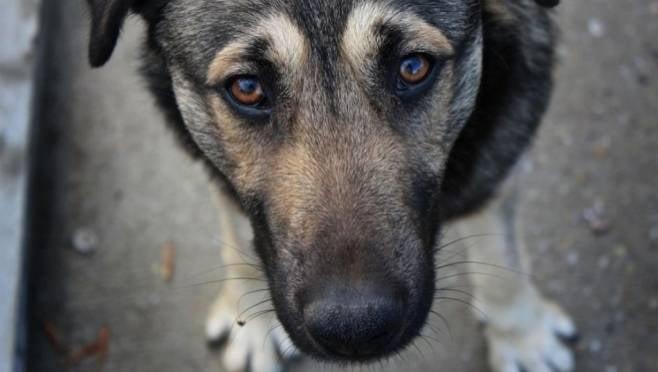 Закон Мордовии о бездомных животных нуждается в серьёзной доработке
