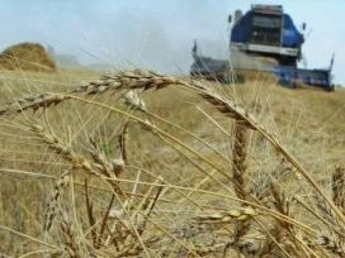 Сознательных аграриев Мордовии будут поощрять субсидиями