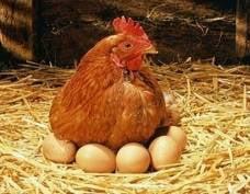 Мэр Саранска распорядился привозить на ярмарки больше яиц