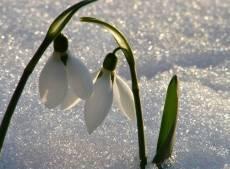 В конце недели в Мордовию придёт настоящая весна