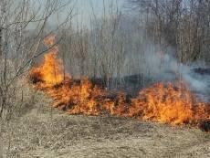 В лесах Мордовии официально наступает пожароопасный сезон