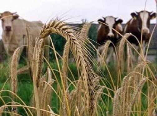 Мордовия получит 220 млн  рублей на развитие сельского хозяйства