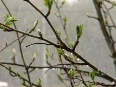 На Первомай в Мордовии возможны дождь и гроза