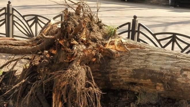 В Мордовии мужчину насмерть задавило деревом