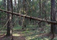 В некоторых лесах Мордовии велика вероятность возникновения несчастных случаев