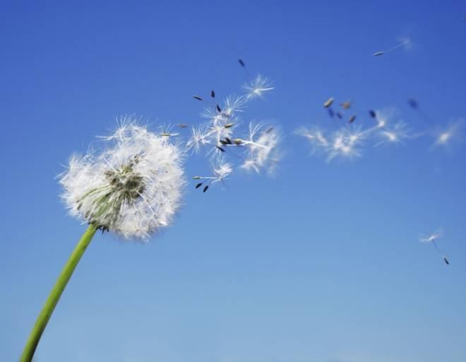 В Мордовии ожидаются порывы ветра