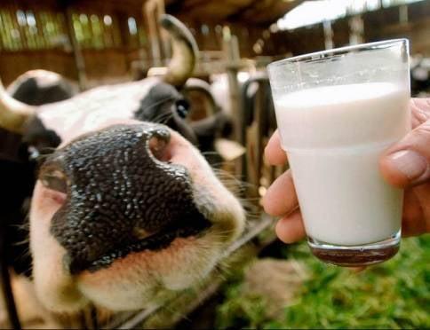 Четыре района Мордовии «подкачали» с молоком