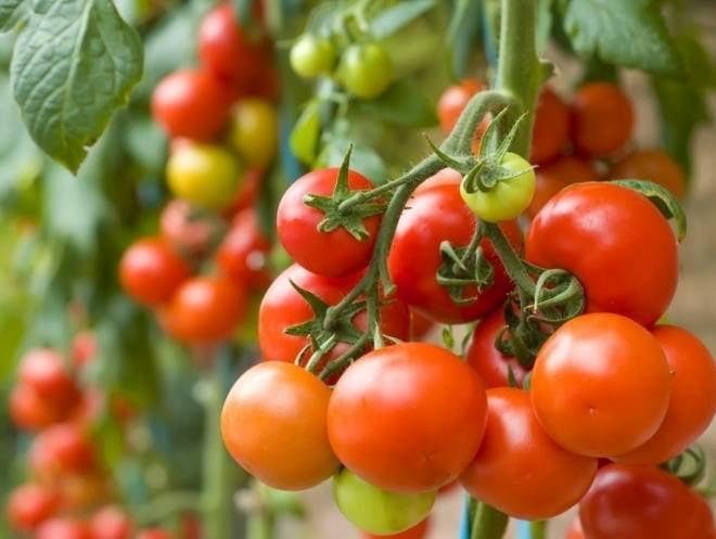 Горожанам дадут возможность купить недорогие продукты мордовских фермеров