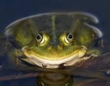 В Мордовии проснулись жабы