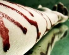 Киллер банды «Химмаш» покончил с собой в камере СИЗО Саранска