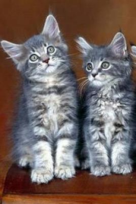 Кошки всего мира постер