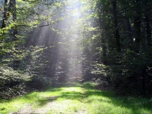 В лесах Мордовии будет вестись круглосуточное дежурство