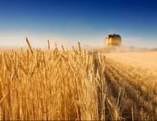 Аграрии Мордовии побили свой прошлогодний рекорд по урожаю зерновых