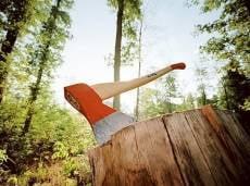 Сохранность лесов Мордовии будут контролировать активисты