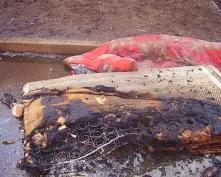 В Саранске прохожие потушили бомжа