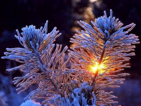 В новогоднюю ночь в Мордовии будет морозно