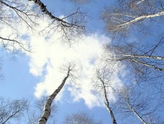 Саранск бьёт температурные рекорды