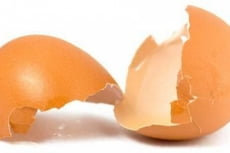 В Мордовии устроили огромную свалку из яичной скорлупы и помёта
